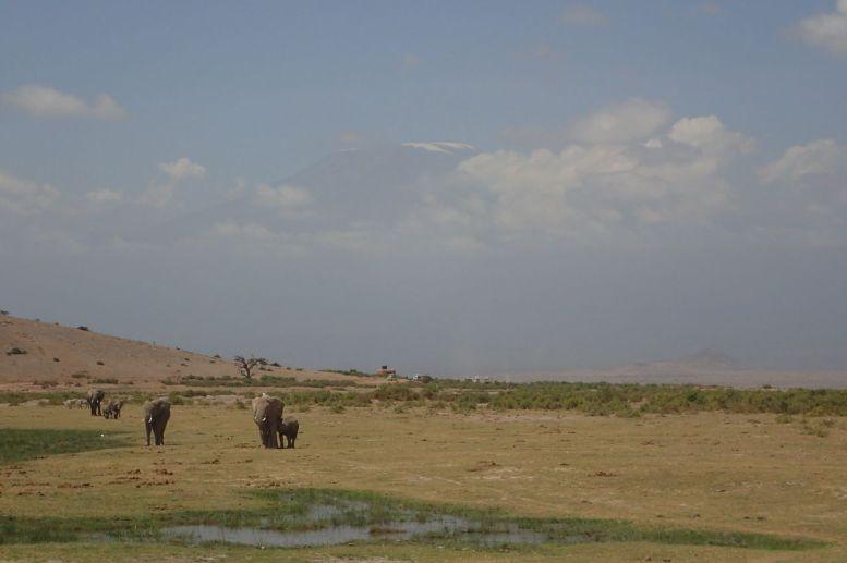 Im Amboseli NP - Erste Blicke auf den Kibo