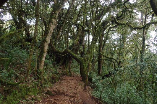 Hinter der Mandara Hut schluckt uns der Regenwald