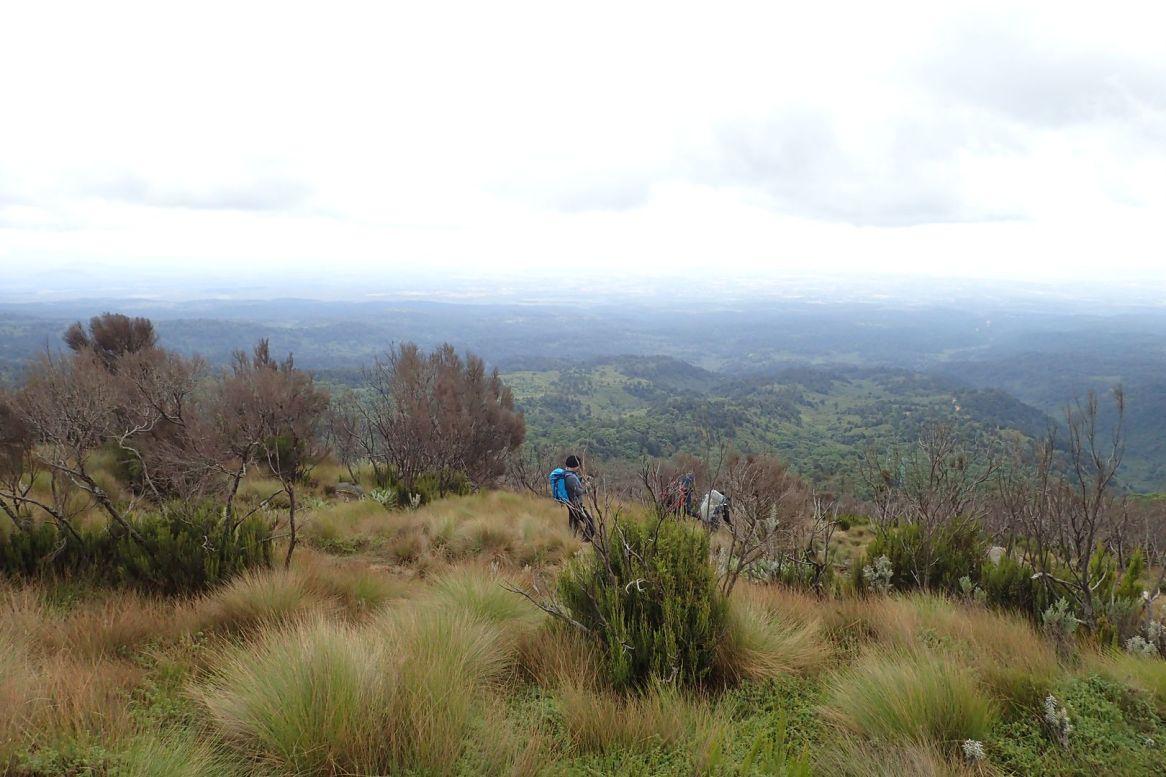 Am Ende des Mackinder Valley, beim Abstieg zum Regenwald