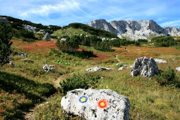 Image result for borovnice na treskavica