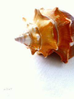shiny shapely shell