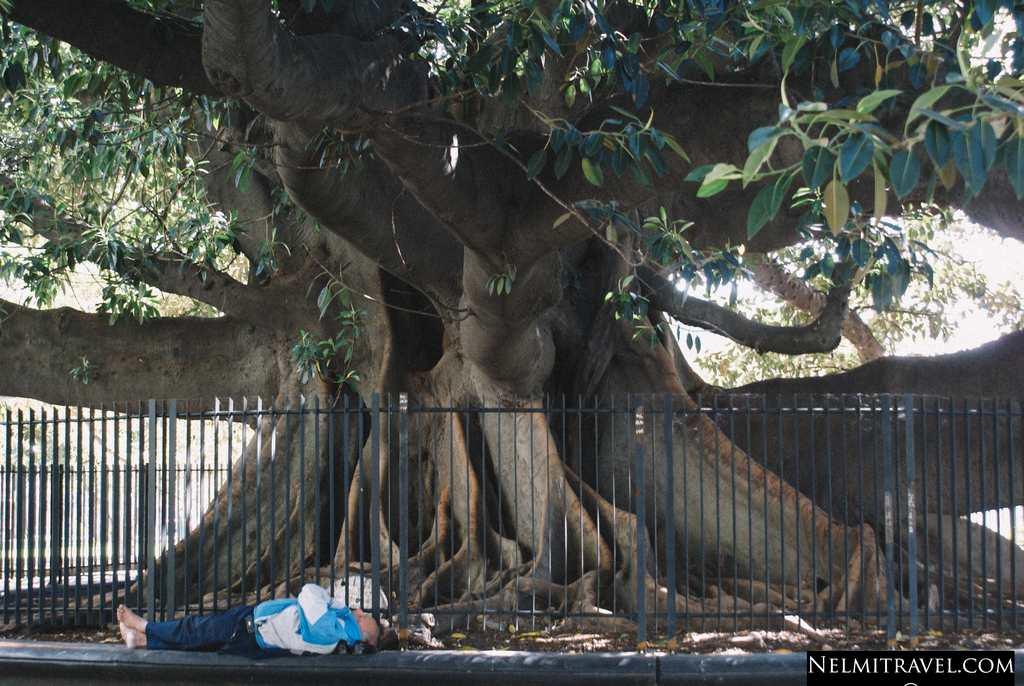 Nelmitravel.com; rubber tree,rubber from rubber tree,La Recoleta,Cafe La Biela,Plaza Francia,Buenos Aires,La Recoleta Cemetery