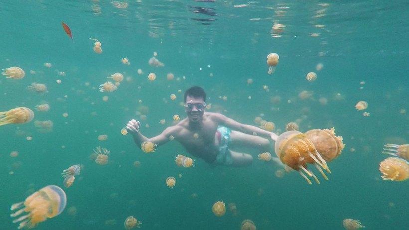 Swim with stingless jellyfish in Sohoton Cove
