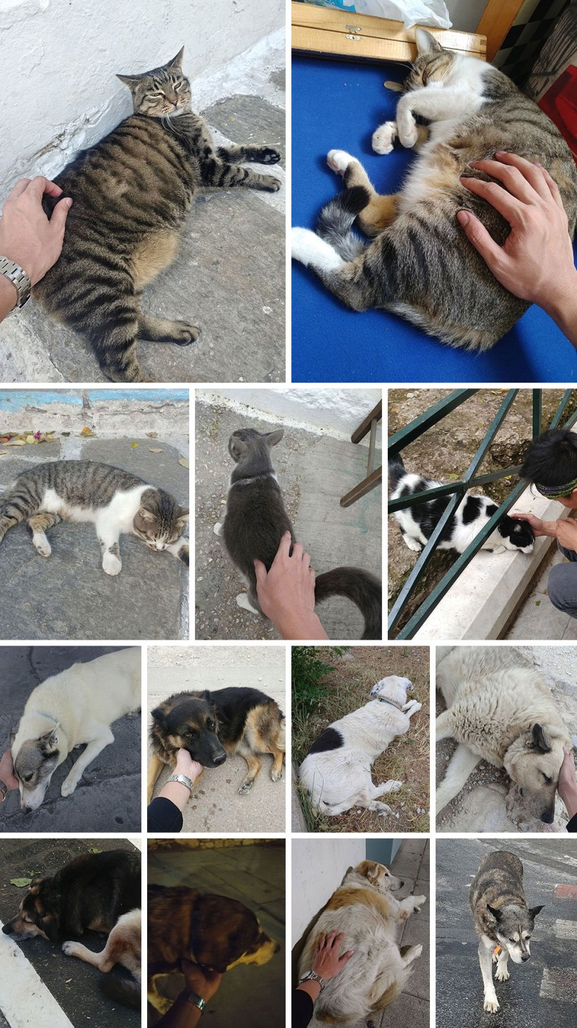 The cats and dogs of Greece