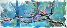 Tokoyo Cherry Blossoms