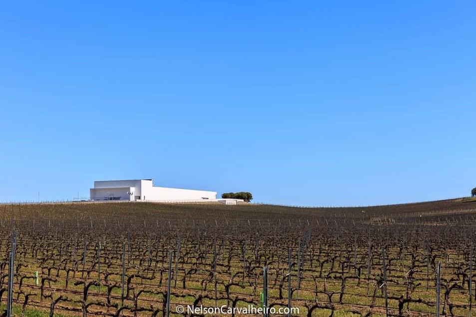 Nelson_Carvalheiro_Alentejo_Wine_Travel_Guide_Adega_Mayor-2
