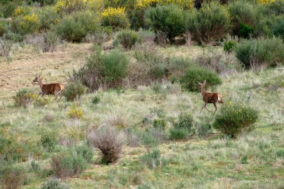 Vale Feitoso private hunting ground, Termas de Monfortinho, 2016