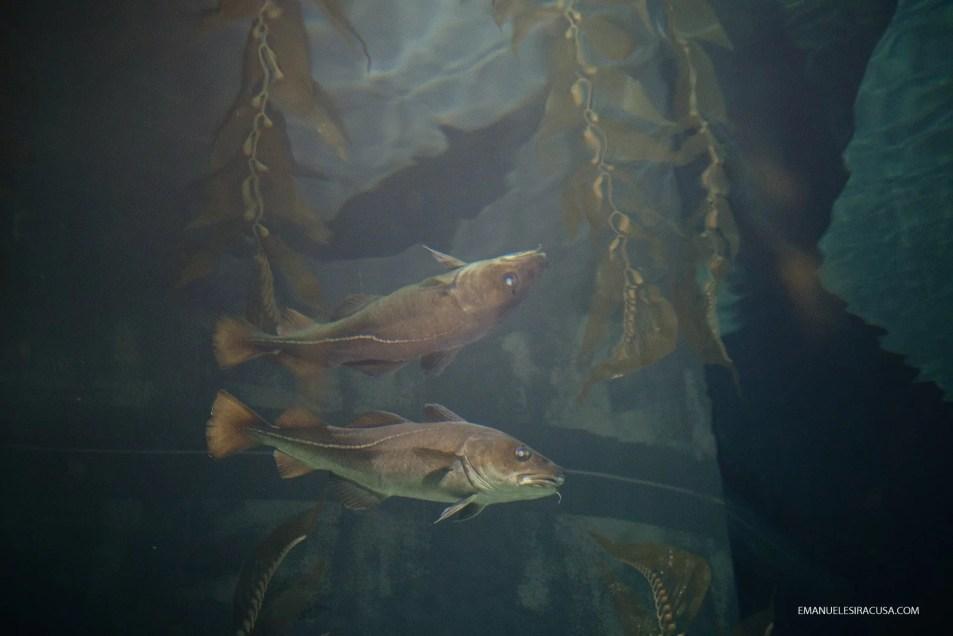 emanuele-siracusa-centro-de-portugal-ilhavo-codfish-museum-26