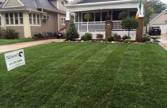 sod Archives - Mequon Landscaping   Milwaukee Landscaping