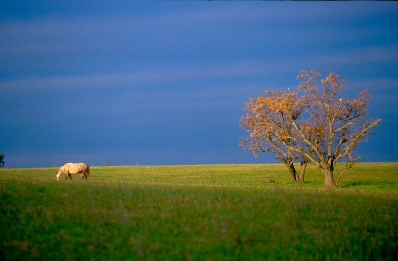 Uruguay, Paysandu, pastoreo, animal