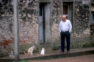 Uruguay, Río Negro, Fray Bentos, Barrio Anglo, Sr y sus gatos, animal