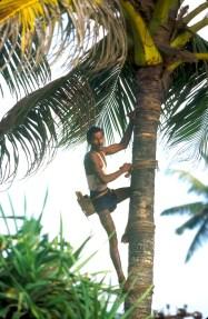 Sri Lanka, Bentota, Recogida de Savia de la Palmera de Coco, Agua Ardiente, palmeras, árbol