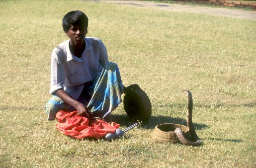 Sri Lanka, Colombo, jardín botanico, encantador de serpientes, retrato