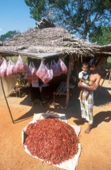 Sri Lanka, Galle, venta de guindillas en la carretera, retrato