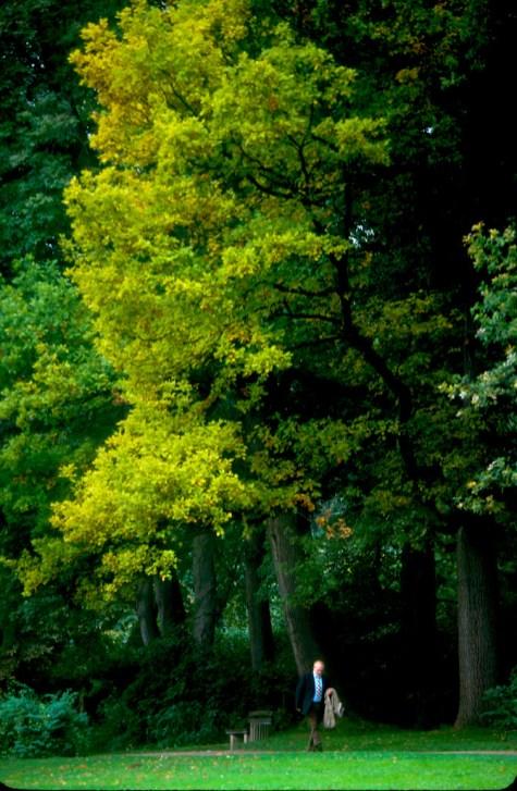 Alemania, Turingia, Weimar, parque de Goethe