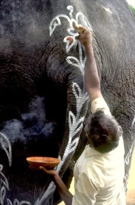 India, Mysore, Fiesta de Dussehra, Karnataka, decoraciones del Elefante para del desfile, animal