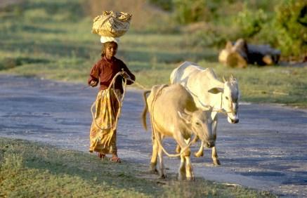 India, Mysore, carretera, el trabajo de cada mañana, retrato