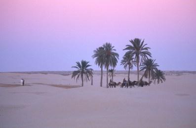 Túnez, oasis de dunas, Douz, dromedarios