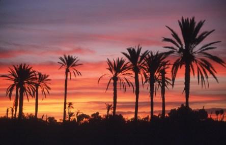 Túnez, oasis de dunas, Tozeur, atardecer, nocturno