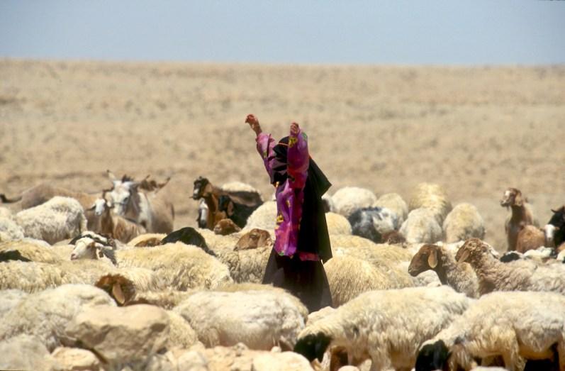 Israel, desierto del Negev, Pastor,trabajo