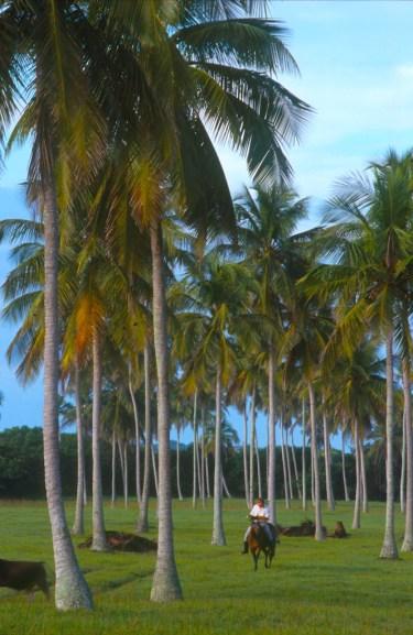 México, Casitas, jinete y palmeras, transporte, animal