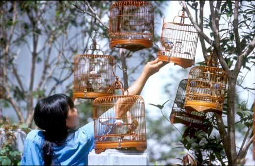 Hong Kong, mercado de pájaros