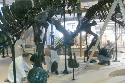 Bélgica, Bruselas, Parque Leopoldo, Museo Ciencias Naturales, Fósil de Iguanodontes