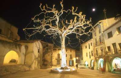 La Selva Arbucies, árbol