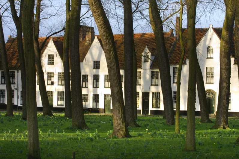 Flandes, Brujas, árbol