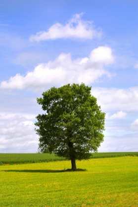 Bretaña, Morbinhan, arbol paisaje