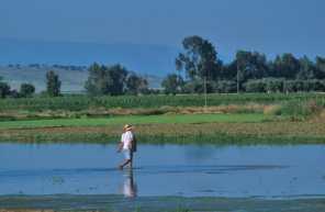 Extremadura Medellin campos de arroz
