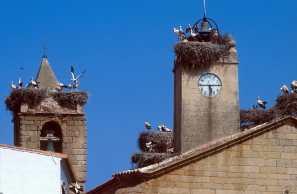 Extremadura, Mal Partida de Cáceres, Cigüeñas