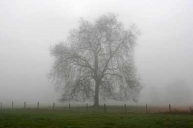 Francia, Loira Atlántico, árbol