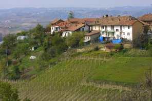 Piamonte Viñedos