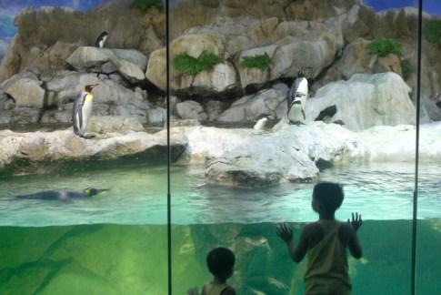 Singapur, Parque de Aves de Jurong, pingüinos, animal