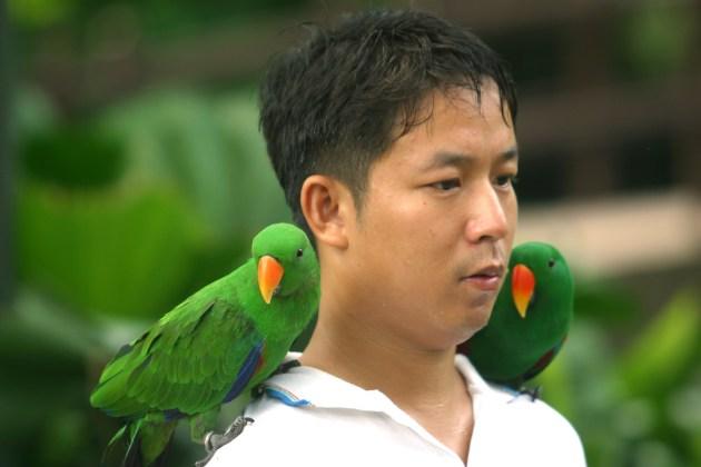Singapur, Parque de Aves de Jurong, fotos con Loros, animal, retrato