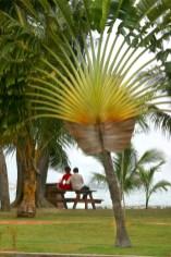"Singapur, Isla Kusu, árbol ""Voyager"", pareja"