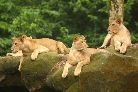 Singapur, Zoológico, Safari de noche, animal