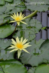Kew image 10