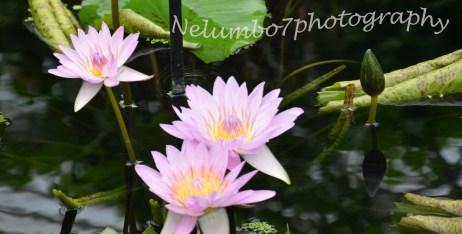 Kew image 5