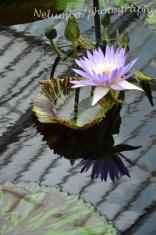 Kew image 6