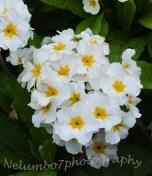 Posie of white flowers
