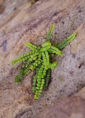 Wall fern 2