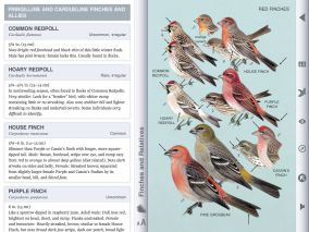 Another plate showing the finches