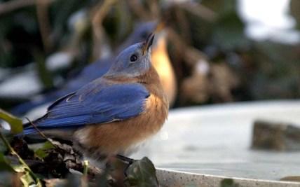 bluebird 6, PA