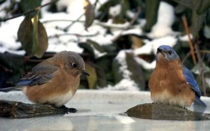 bluebird 9, PA