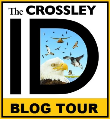 The Crossley Raptor ID Quiz by Drew Weber | Nemesis Bird
