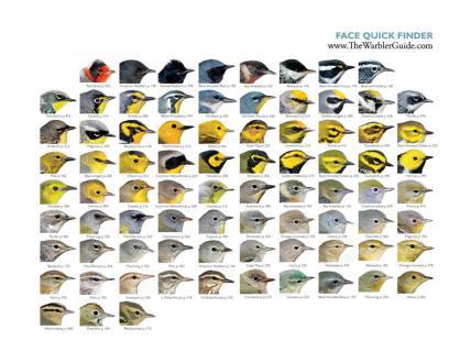 Faces Quick Guide