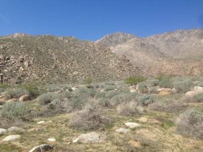 Desert on the San Andreas Loop (Photo by Nathan Goldberg)