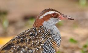 Pretty plumage headshot